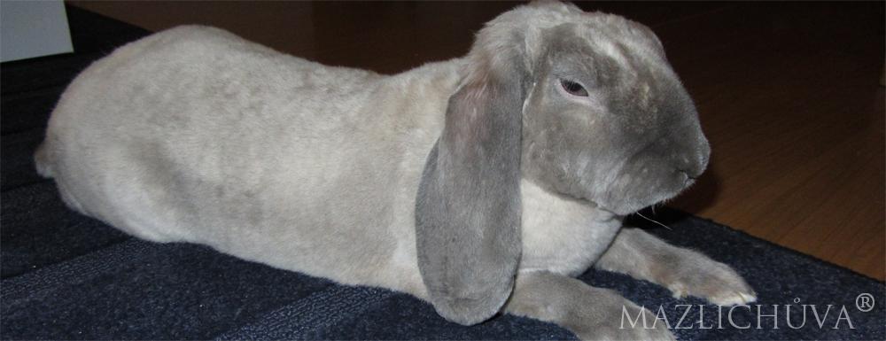 Hlídání králíčka Adámka